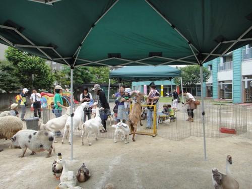 ミニ動物園3